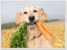 How Often Can You Give Your Dog A Carrot