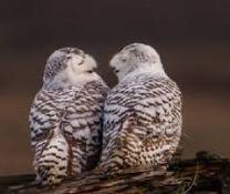 Sharing birds